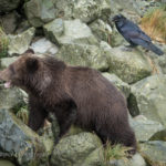 nature photography, travel photography, photography blogs, wildlife photography