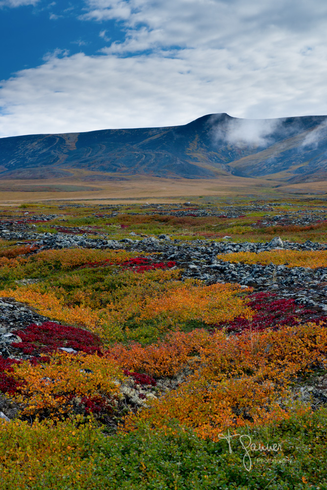 Dempster Highway, Yukon Territory, Northwest Territory, Arctic Circle, Richardson Mountains, tundra