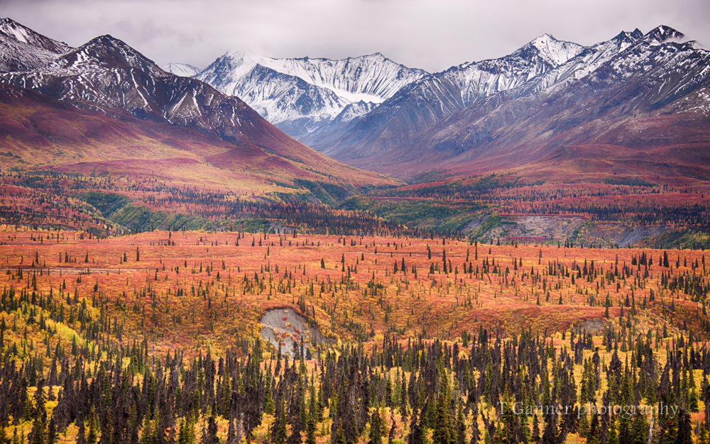 Alaska, autumn, foliage, Glenn Highway