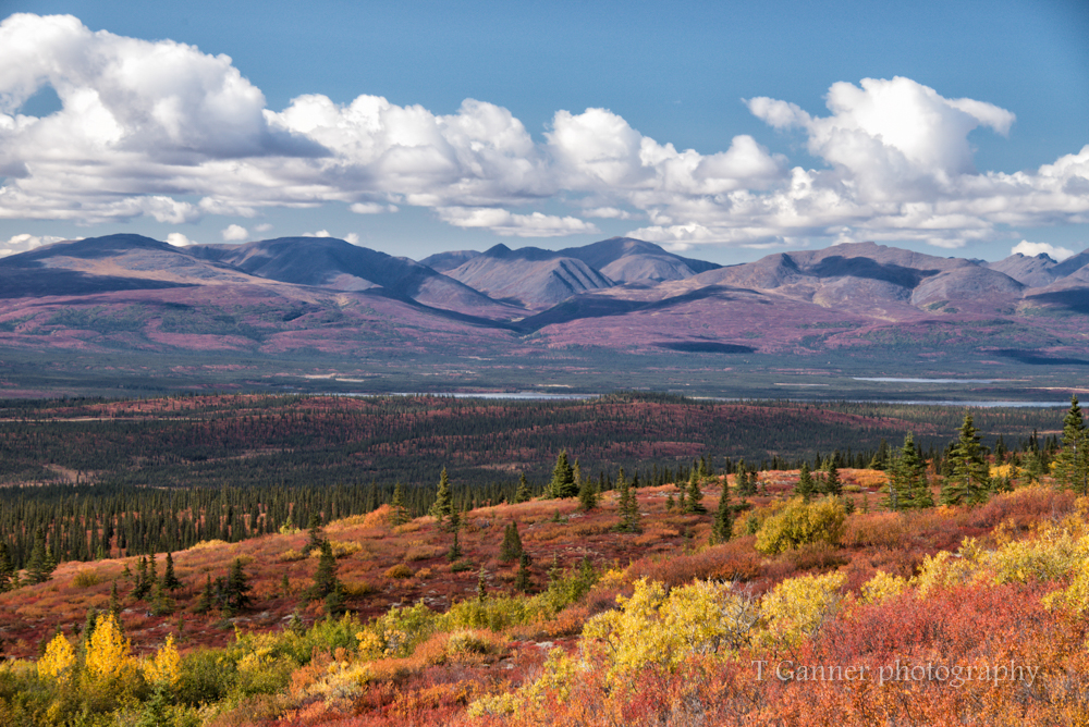 Alaska, autumn, foliage, Denali Highway, tundra