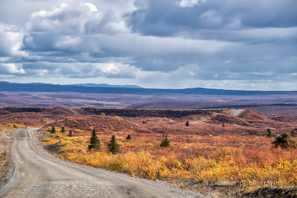 Alaska, autumn, foliage, Denali Highway
