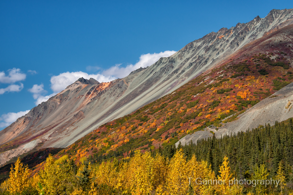 Alaska, autumn, foliage, Richardson Highway, Rainbow Highway