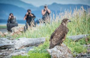 photography workshop, vacation, hiking trail, haines, ak, alaska