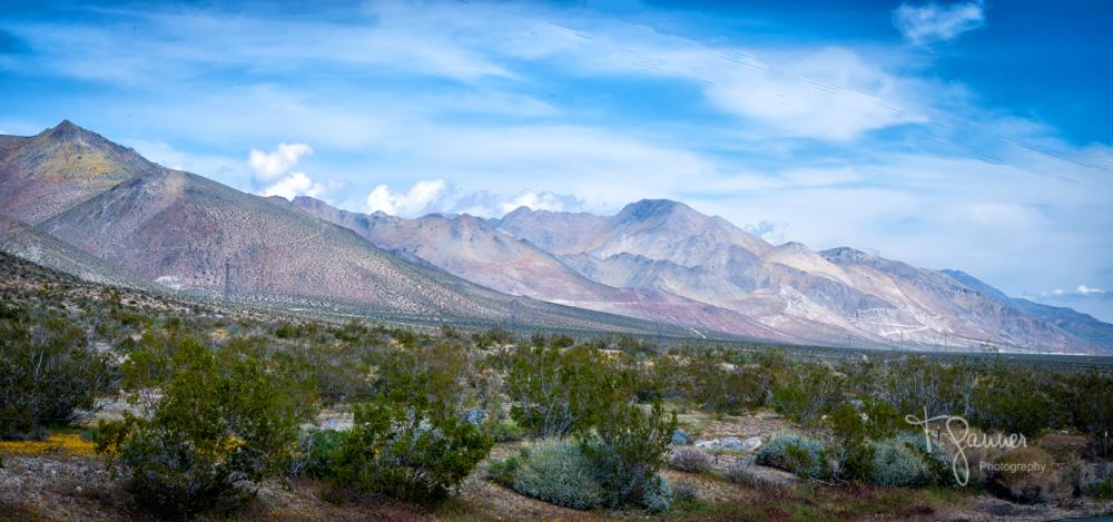 California Super Bloom, wildflowers, Mojave wildflowers, Ridgecrest, Inyokern, Sierra Nevada, Indian Wells Valley