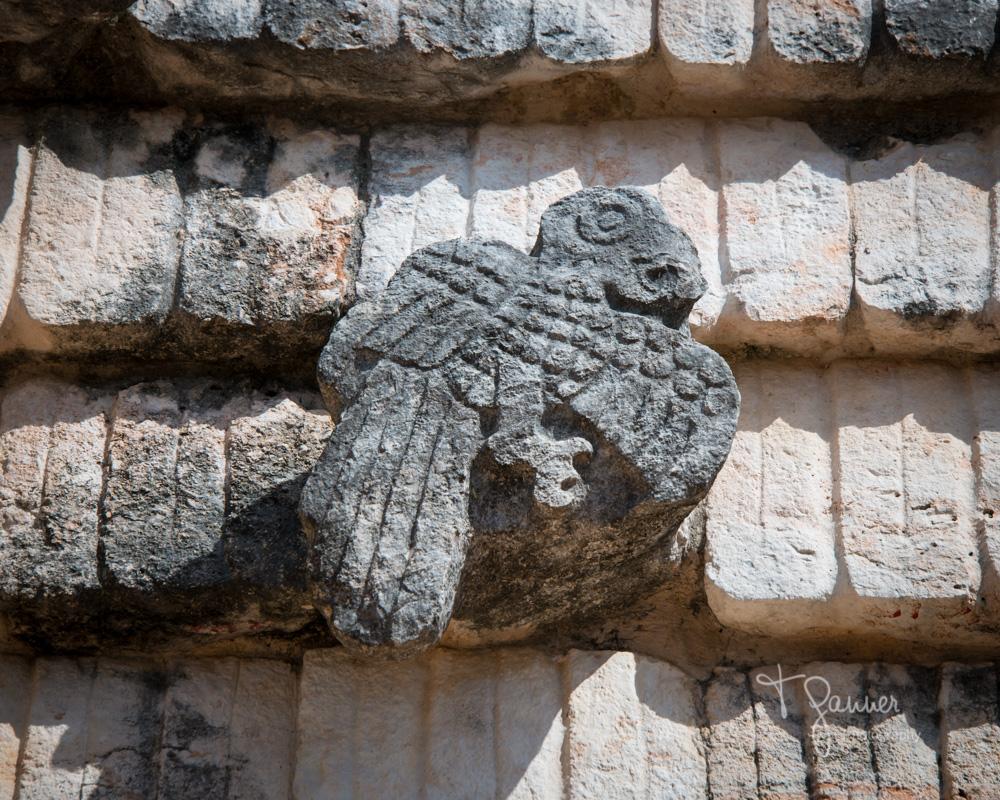 Uxmal, Maya, Mayan, Mayan culture, Yucatan, Mayan ruins, Temple of the Magician, Macaw